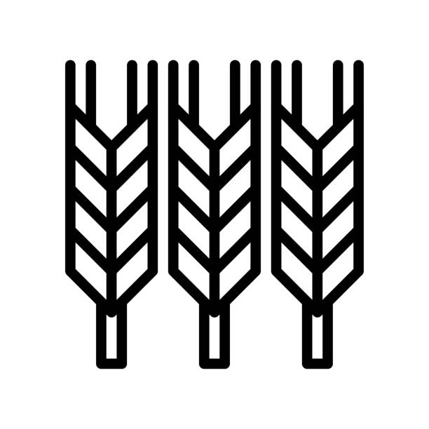 administrative related wheat seeds vector in lineal style, administrative related wheat seeds vector in lineal style administrate stock illustrations