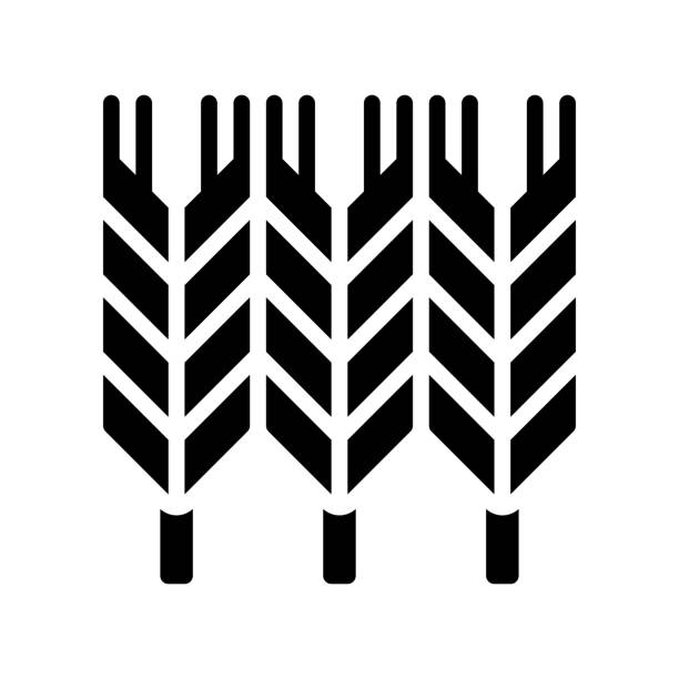 administrative related wheat seeds vector in solid design, administrative related wheat seeds vector in solid design administrate stock illustrations
