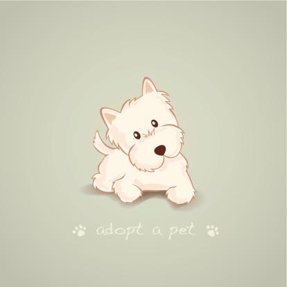 Adopt a Pet Westie