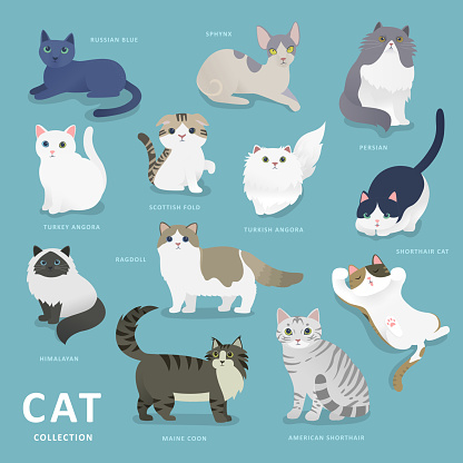Adorable cat breeds collection