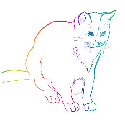 Adorable Cat Rainbow