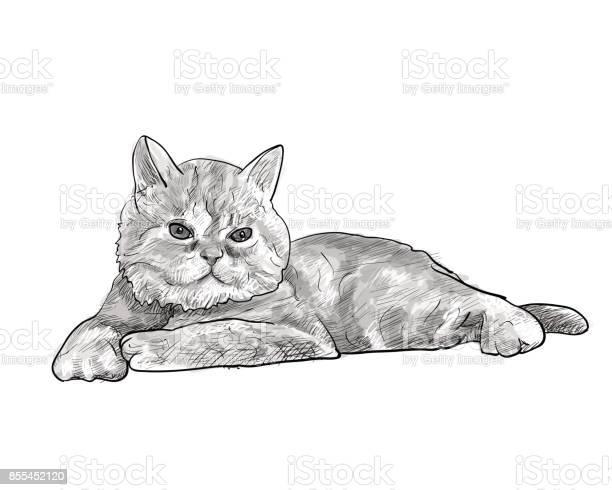 Adorable lying persian cat isolated on white background vector id855452120?b=1&k=6&m=855452120&s=612x612&h=h1nqb1ix9utye3z0zipz5 ngysvo3mpy3nd13smvhvu=