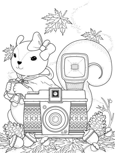 eichhörnchen fotos stockvektoren und grafiken  istock