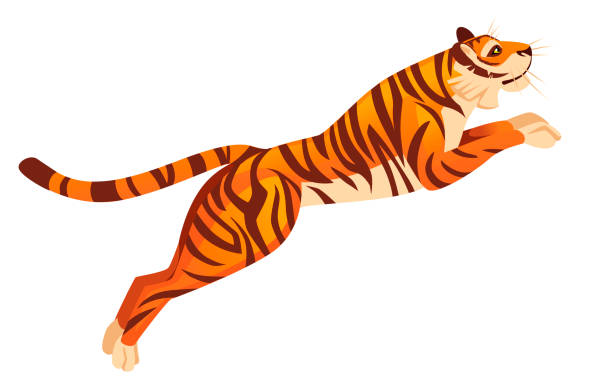 Tiger Jumping Drawing