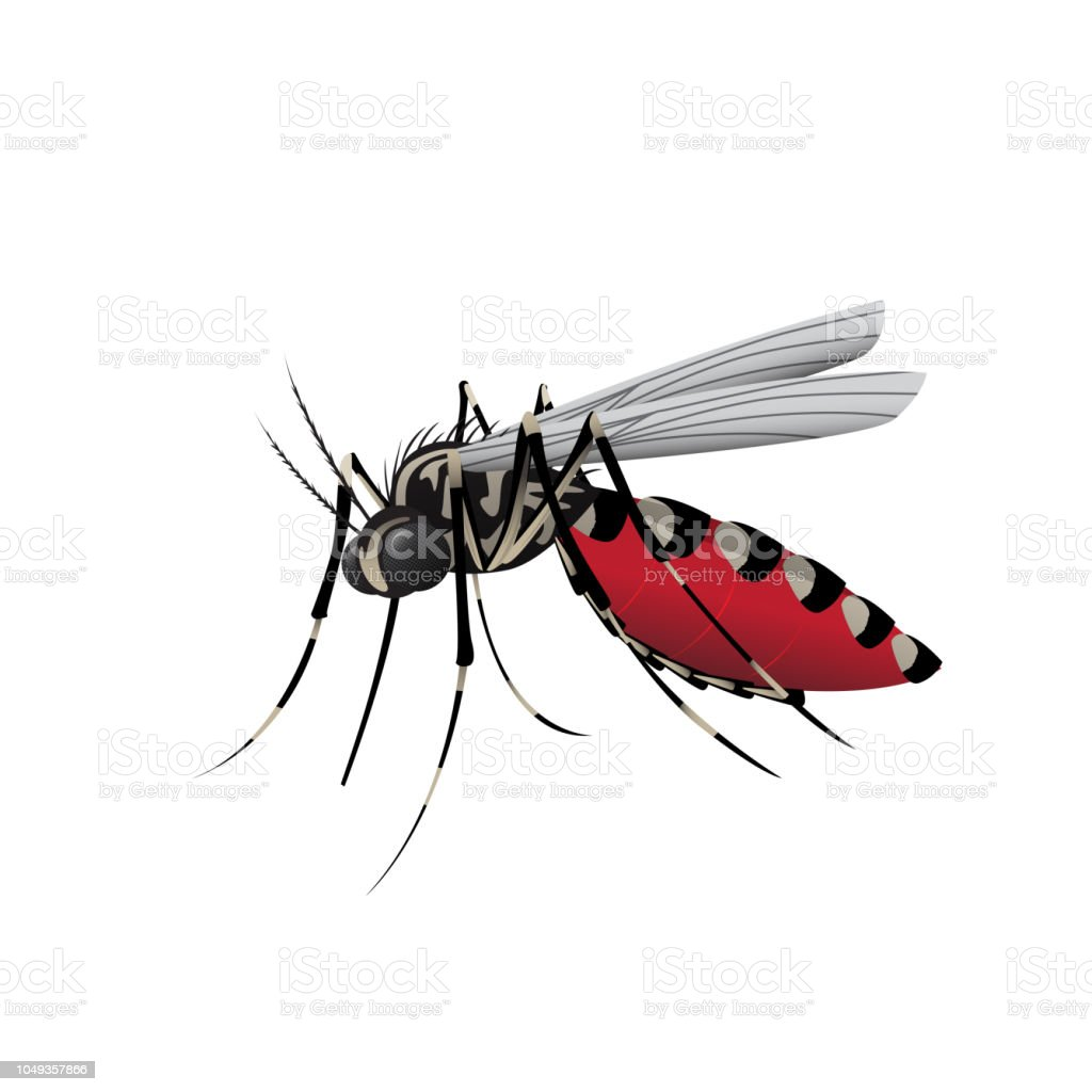 Aedes Mosquito vector art illustration