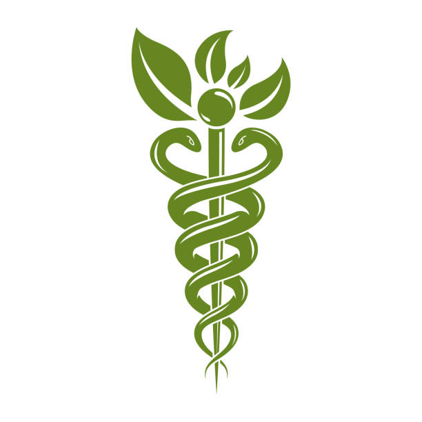 illustrazioni stock, clip art, cartoni animati e icone di tendenza di aesculapius vector abstract illustration created using snakes and green leaves, caduceus symbol. healthy lifestyle is strong heart. - ancient medical symbol
