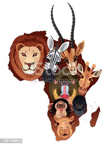 Vector Africa Animals