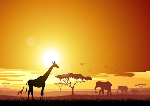 Vetores de A África e mais imagens de Animal selvagem