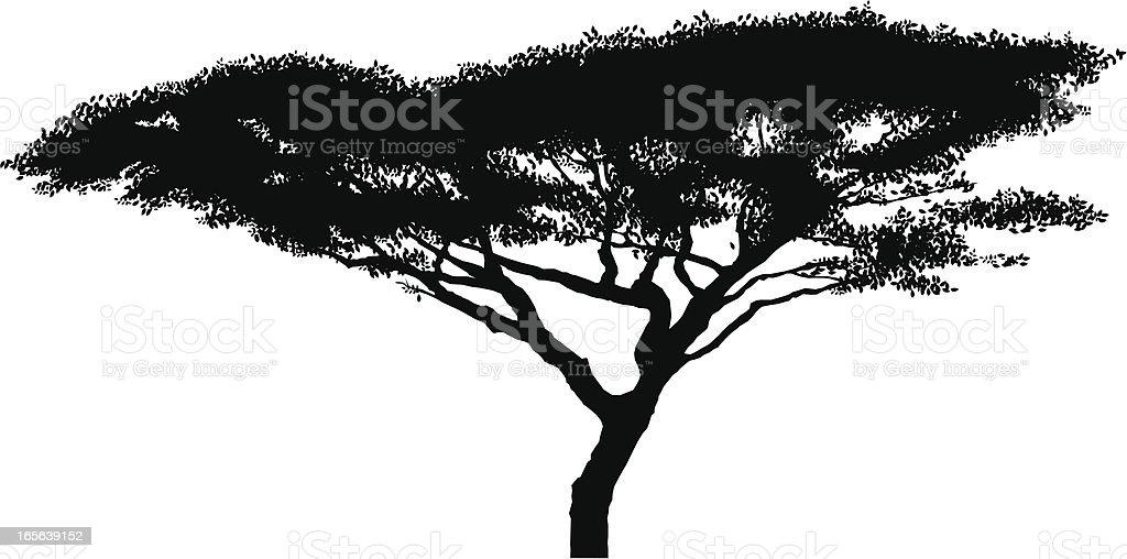 Afrikanischer Akazie Baum silhouette – Vektorgrafik