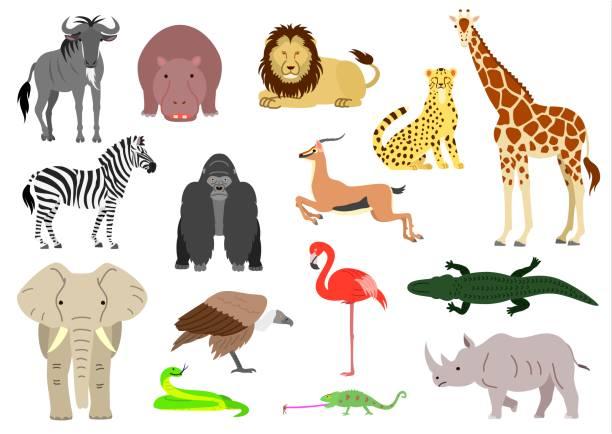 stockillustraties, clipart, cartoons en iconen met afrikaanse dieren element set - antilope