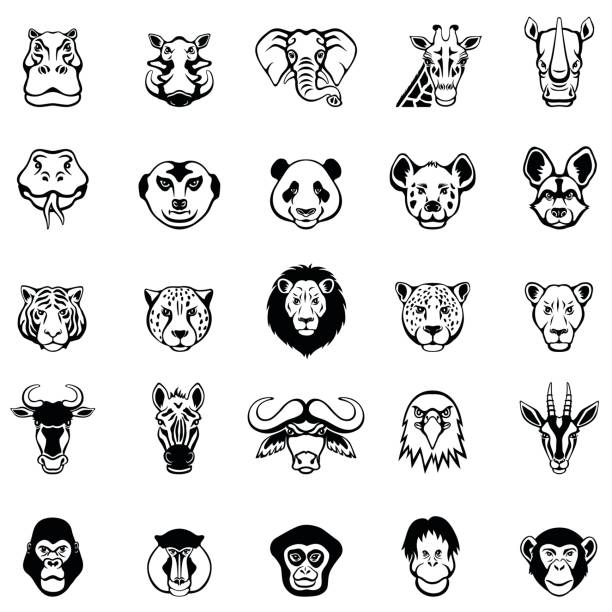 african animal faces - tiger stock illustrations, clip art, cartoons, & icons