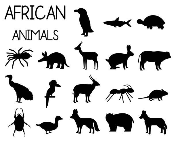 afrikanische tier silhouetten satz von ikonen im flachen stil, afrikanische fauna, zwerggans, afrikanischen geier, büffel, gazelle dorcas, etc. vektor-illustration - ameisenbär stock-grafiken, -clipart, -cartoons und -symbole