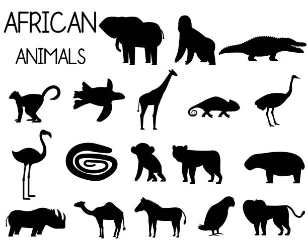 stockillustraties, clipart, cartoons en iconen met afrikaanse dieren silhouetten set van iconen in platte stijl, afrikaanse fauna, olifant, neushoorn, leeuw, papegaai, enz. vector illustratie - leatherback