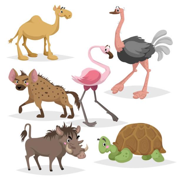 stockillustraties, clipart, cartoons en iconen met afrikaanse dieren tekenfilm reeks. kameel, grote afrikaanse schildpad, flamingo, hyena's, warthog en struisvogel. dierentuin dieren in het wild collectie. vectorillustraties geïsoleerd op een witte achtergrond. - hyena