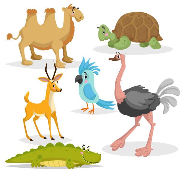 Animaux d'Afrique dessin animé ensemble. GAZZELLE anthelope, crocodile, chameau de Bactriane, grande tortue africaine, perroquet et autruche. Collection de la faune de zoo. Illustrations vectorielles isolées sur fond blanc. - Illustration vectorielle
