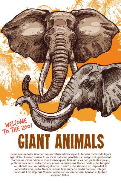 アフリカの動物象動物園ベクトル ポスター - 野生動物旅行点のイラスト素材/クリップアート素材/マンガ素材/アイコン素材