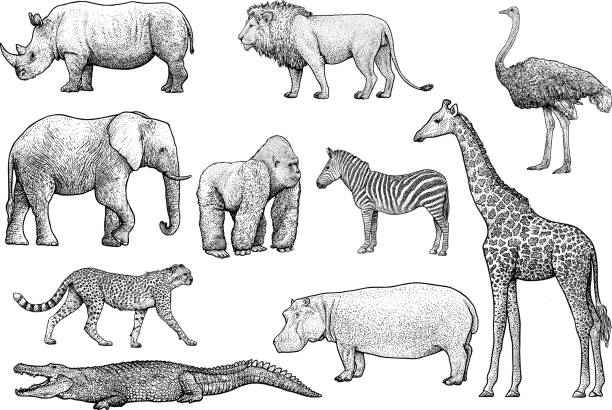 african animals illustration, drawing, engraving, ink, line art, vector - animals stock illustrations