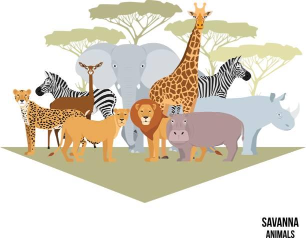 African animals of savanna elephant, rhino, giraffe, zebra, lion, hippo vector art illustration