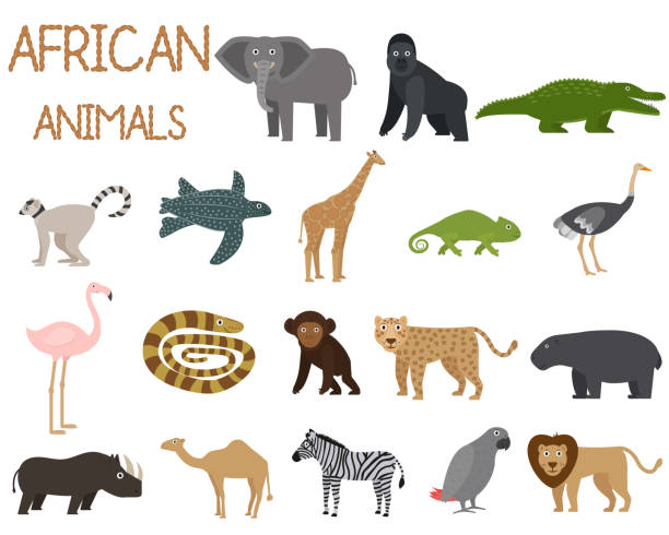 stockillustraties, clipart, cartoons en iconen met afrikaanse dieren set van iconen in platte stijl, afrikaanse fauna, olifant, neushoorn, leeuw, papegaai, enz. vector illustratie - leatherback