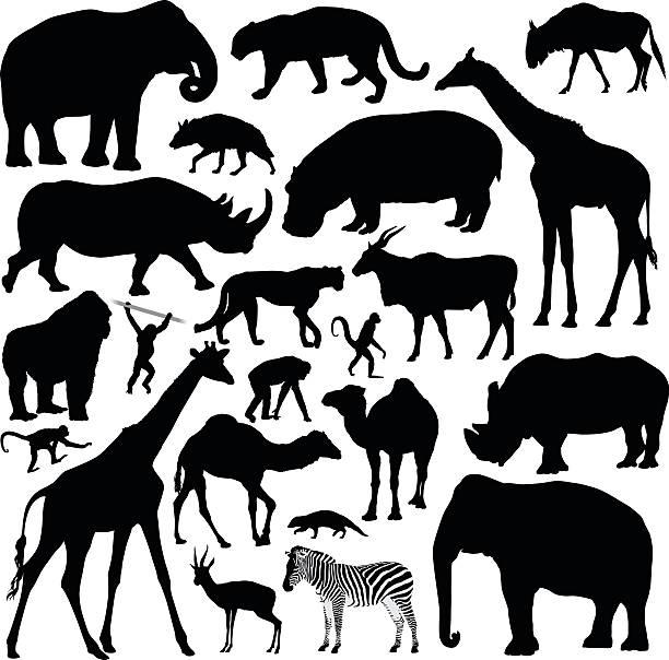 アフリカの動物 - 動物園点のイラスト素材/クリップアート素材/マンガ素材/アイコン素材