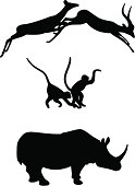 African Animals (Springbok, Monkeys & Rhino)
