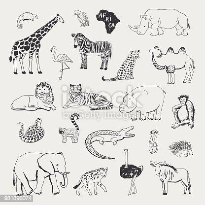 african animals vector illustrartions graphic set