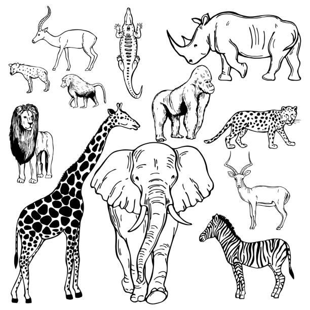 ilustraciones, imágenes clip art, dibujos animados e iconos de stock de animales africanos. ilustración de boceto vectorial. - conceptos y temas