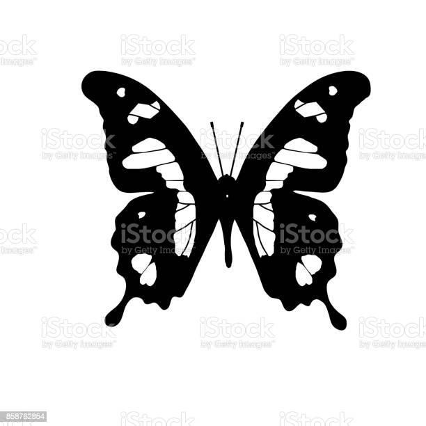 African butterfly emperor swallowtail vector id858762854?b=1&k=6&m=858762854&s=612x612&h=xpbsslpdggw8dqpsj5iu1nppqqxmky6itg3y8vdblim=