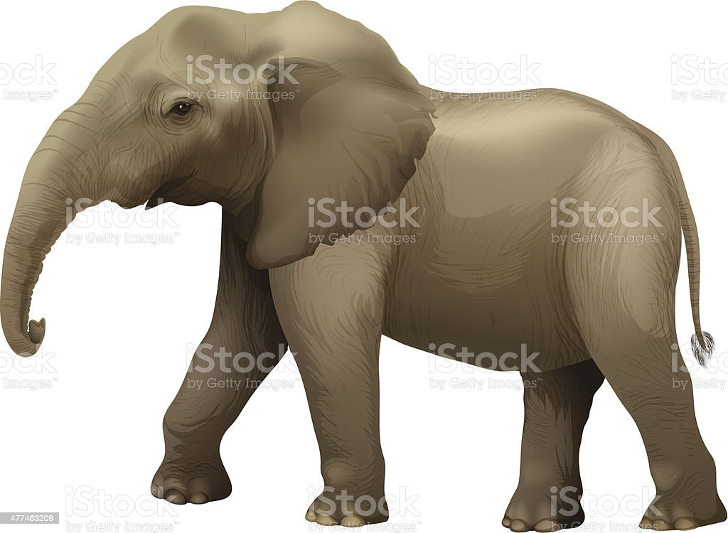 African elephant royalty-free african elephant stock vector art & more images of adult