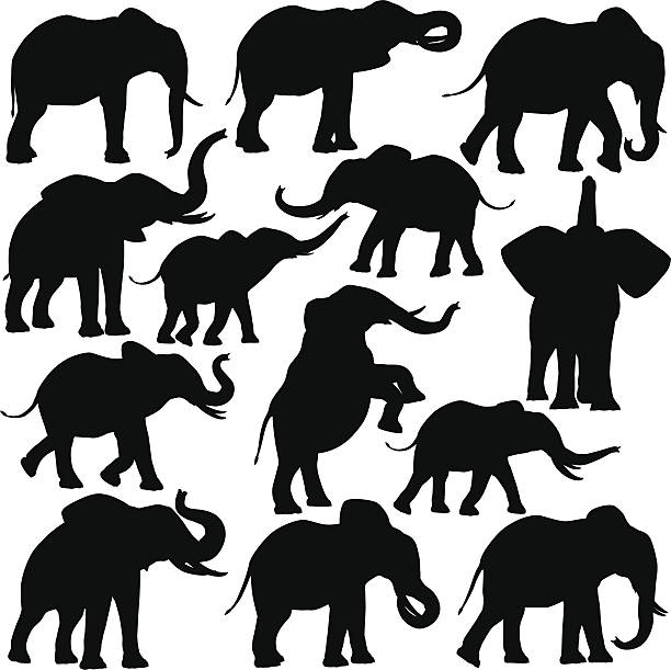 African elephants vector art illustration