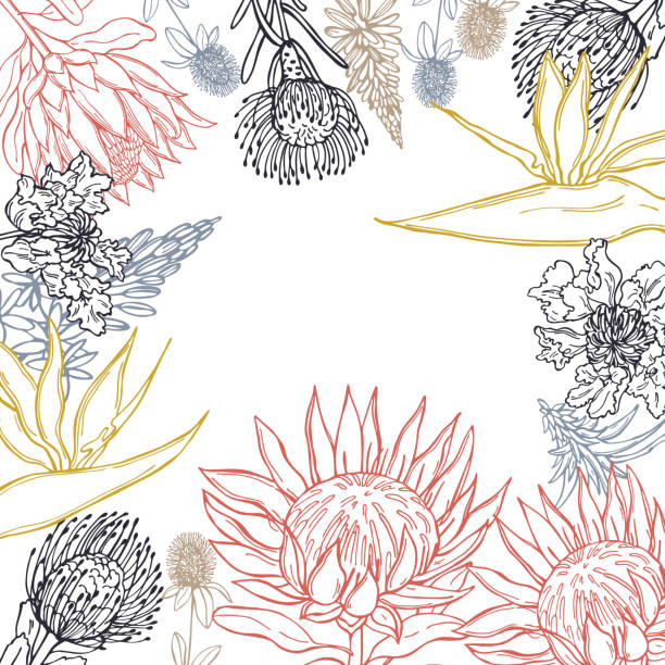 African flowers. Vector  background. Hand drawn African flowers. Vector  background. Sketch illustration. south africa stock illustrations