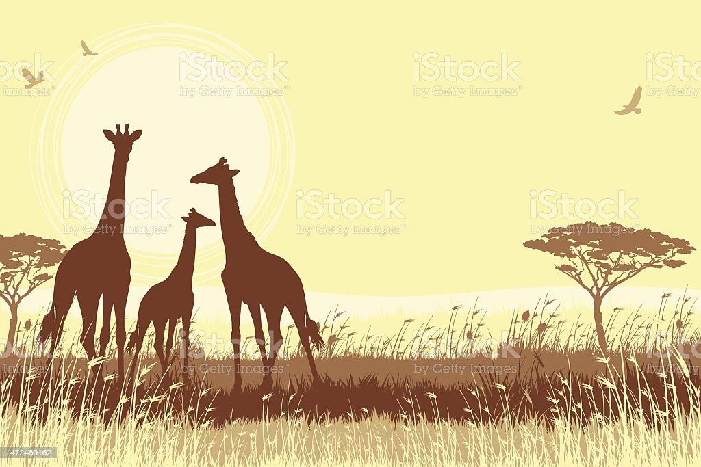 African Giraffes in savanna vector art illustration