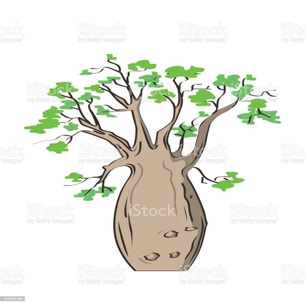African iconic tree, baobab tree. Adansonia gregorii vector art illustration