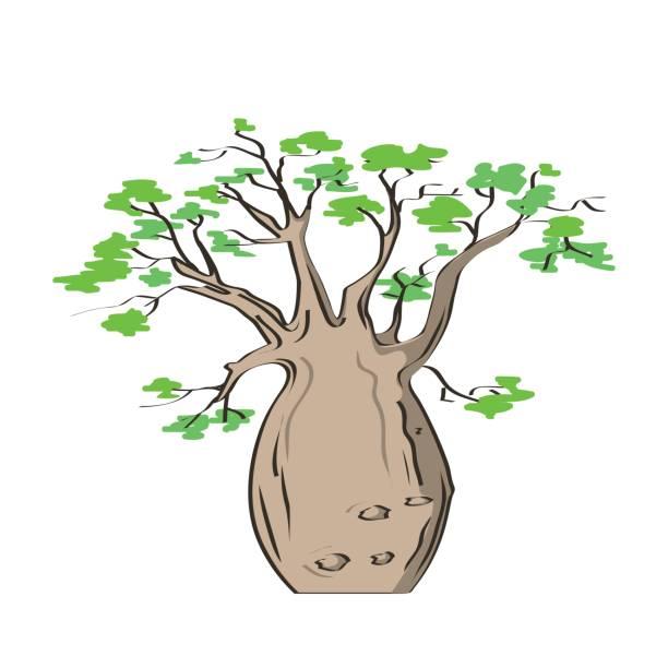 Árbol emblemático africano, árbol de baobab. Adansonia gregorii - ilustración de arte vectorial