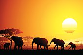 African landscape with funny Elephants silhouettes in hot day