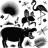 African plants and animals
