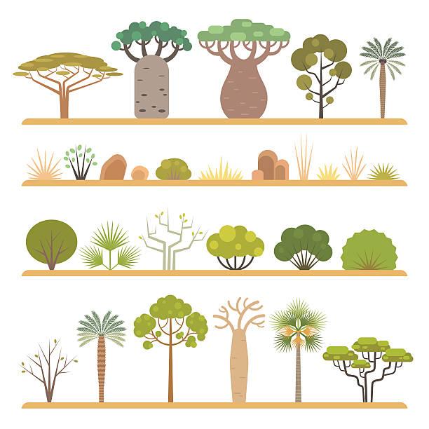 African plants - ilustración de arte vectorial