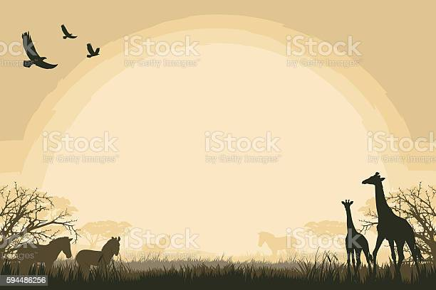African safari background with giraffes and zebras African safari background with giraffes and zebras. Africa stock vector
