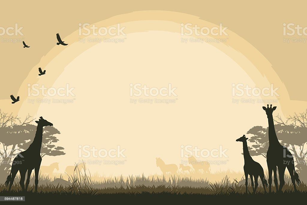 African safari background with giraffes and zebras vector art illustration