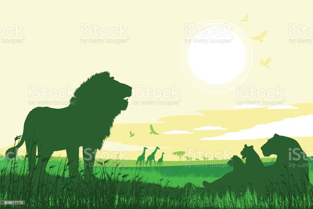 African Safari background with roaring Lions, Lioness, cubs and Giraffes - illustrazione arte vettoriale