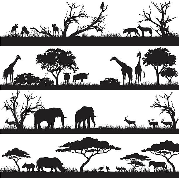 stockillustraties, clipart, cartoons en iconen met african safari silhouettes - afrikaanse vogel