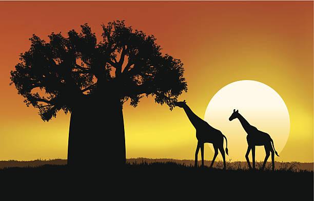 Atardecer africano de Savannah - ilustración de arte vectorial