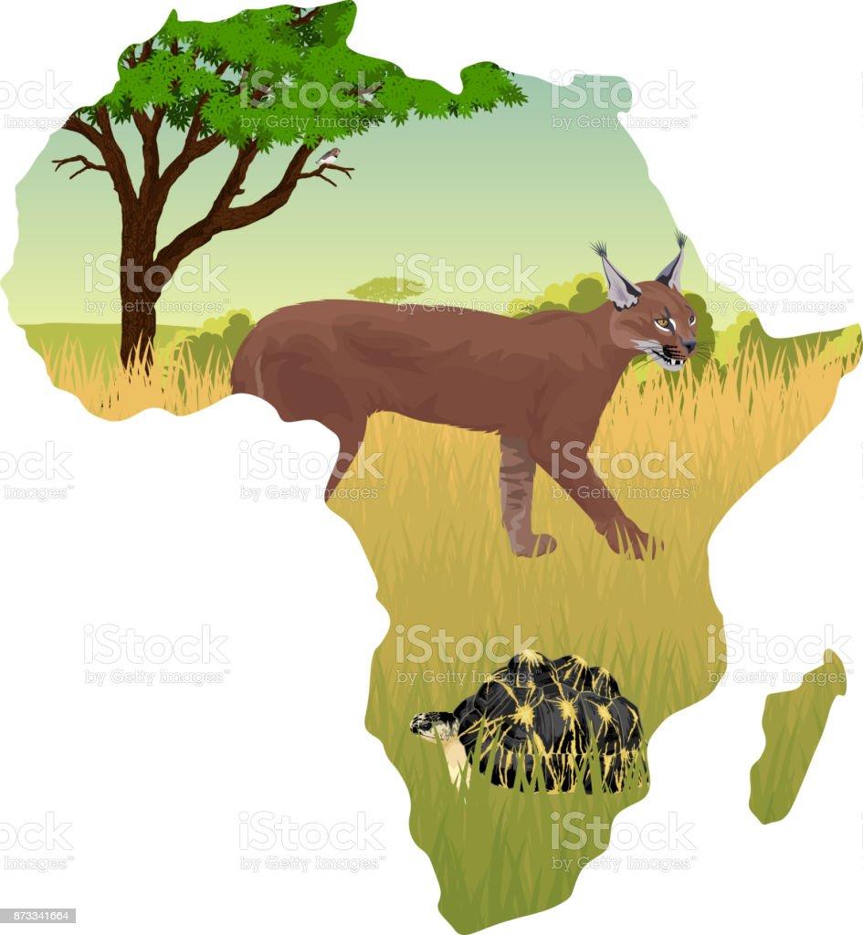 African savannah with caracal and radiated tortoise - vector illustration vector art illustration