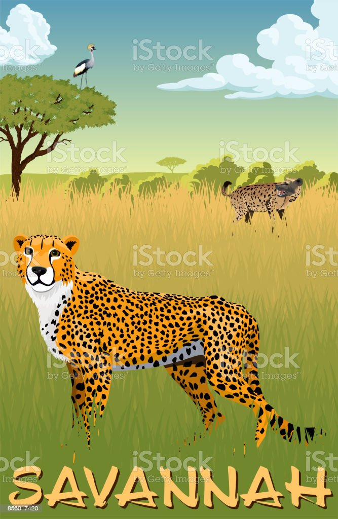 African savannah with cheetah,  spotted hyena and crowned crane - vector illustration vector art illustration