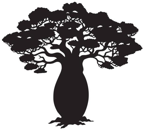 ilustrações de stock, clip art, desenhos animados e ícones de silhueta de árvore africana - alto descrição física