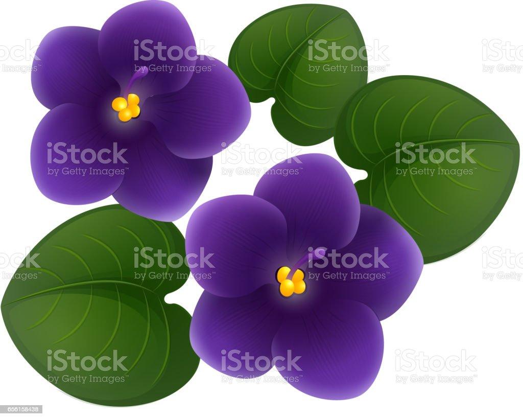 royalty free african violet clip art vector images illustrations rh istockphoto com dark purple flowers clipart purple watercolor flowers clipart