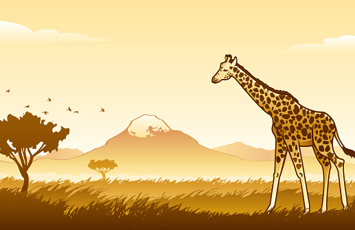 African Wilderness Scene