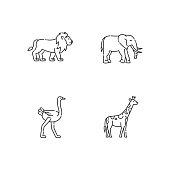 African wildlife pixel perfect linear icons set. Customizable thin line contour symbols. Lion, elephant, giraffe and ostrich. Isolated vector outline illustrations. Editable stroke