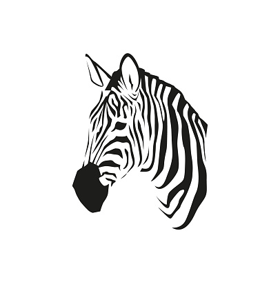 African zebra portrait in vector isolated on white background. Wild animal black and white illustration for minimalist print or other design