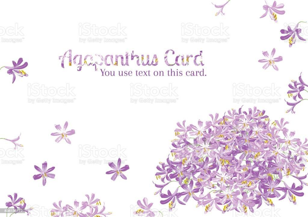Agapanthus flower spring for card vector art illustration